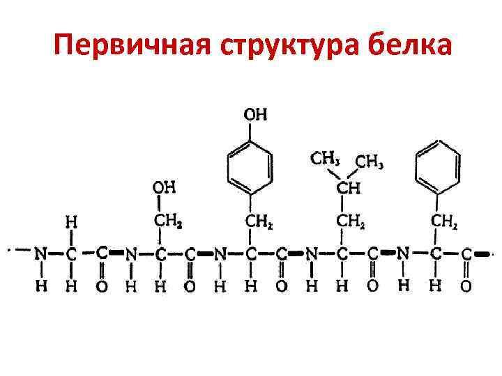 Первичная структура белка