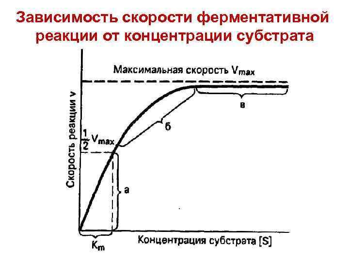 Зависимость скорости ферментативной реакции от концентрации субстрата