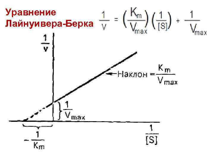 Уравнение Лайнуивера-Берка