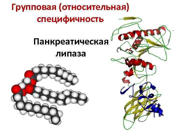 Групповая (относительная) специфичность Панкреатическая липаза