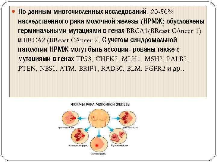 По данным многочисленных исследований, 20 -50% наследственного рака молочной железы (НРМЖ) обусловлены герминальными