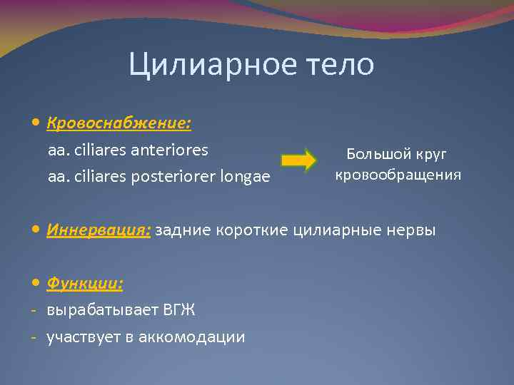 Цилиарное тело Кровоснабжение: aa. ciliares anteriores aa. ciliares posteriorer longae Большой круг кровообращения Иннервация: