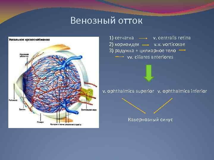 Венозный отток 1) сетчатка v. centralis retina 2) хориоидея v. v. vorticosae 3) радужка