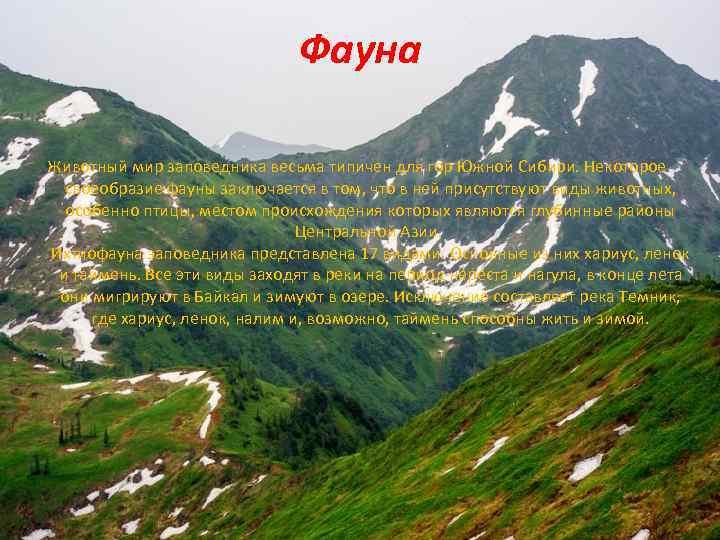Фауна Животный мир заповедника весьма типичен для гор Южной Сибири. Некоторое своеобразие фауны заключается