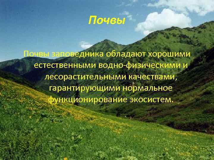 Почвы заповедника обладают хорошими естественными водно-физическими и лесорастительными качествами, гарантирующими нормальное функционирование экосистем.