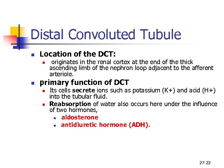 Distal Convoluted Tubule n Location of the DCT: n n originates in the renal