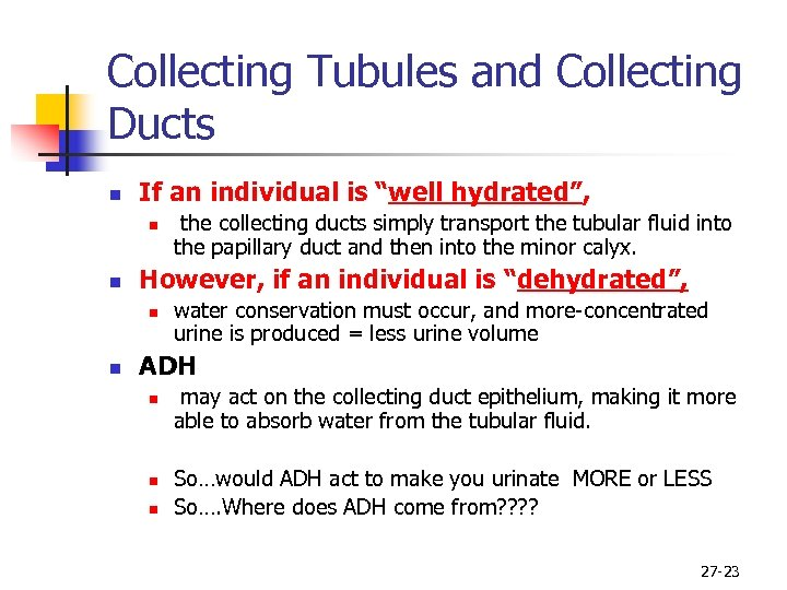 "Collecting Tubules and Collecting Ducts n If an individual is ""well hydrated"", n n"