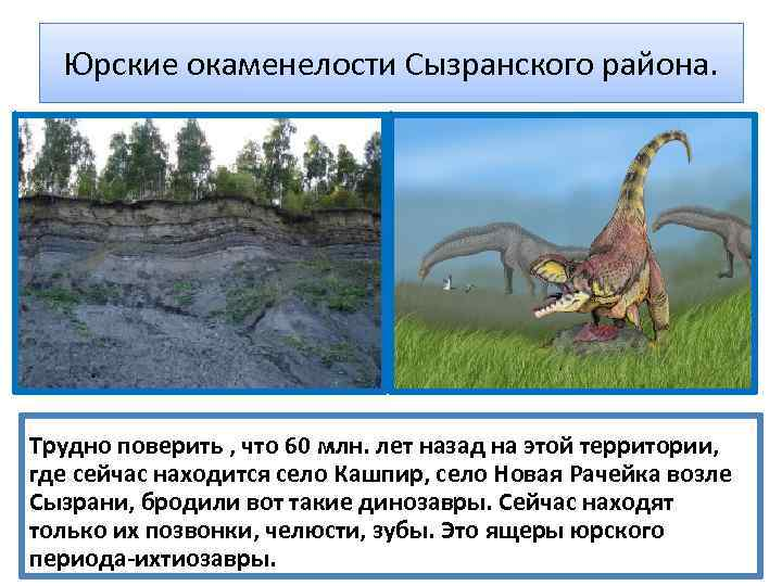 Юрские окаменелости Сызранского района. Трудно поверить , что 60 млн. лет назад на этой
