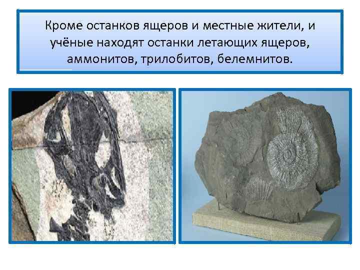 Кроме останков ящеров и местные жители, и учёные находят останки летающих ящеров, аммонитов, трилобитов,