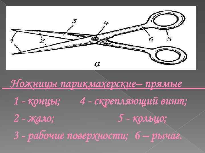 Ножницы парикмахерские– прямые 1 - концы; 4 - скрепляющий винт; 2 - жало; 5