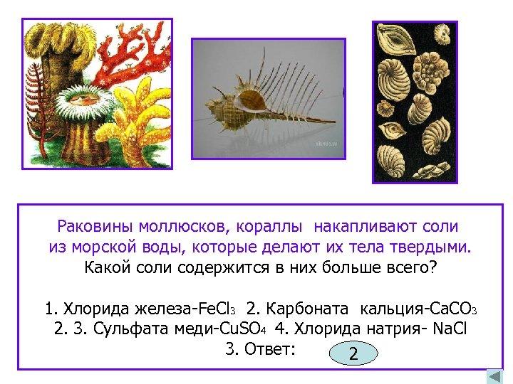 Раковины моллюсков, кораллы накапливают соли из морской воды, которые делают их тела твердыми. Какой