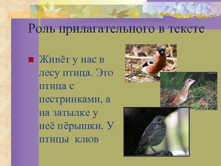 Роль прилагательного в тексте n Живёт у нас в лесу птица. Это птица с