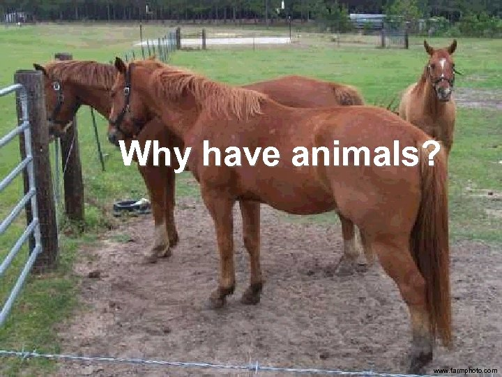 Why have animals? www. farmphoto. com