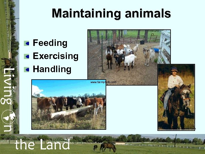 Maintaining animals Living n Feeding Exercising Handling the Land www. farmphoto. com www. mmfarms.