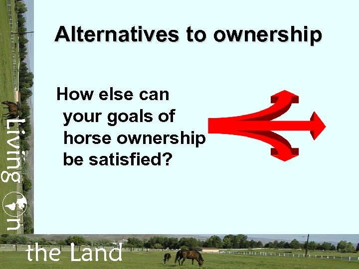 Alternatives to ownership Living n How else can your goals of horse ownership be