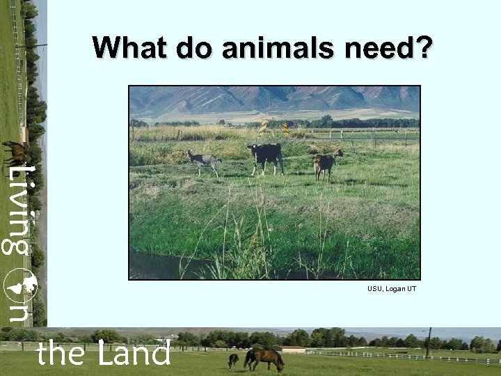 What do animals need? Living n the Land USU, Logan UT