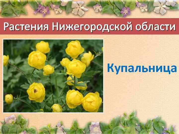 всегда прическа, растительность нижегородской области фото этом коллаже нашел