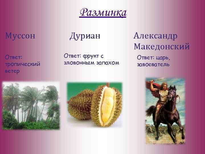 Разминка Муссон Ответ: тропический ветер Дуриан Ответ: фрукт с зловонным запахом Александр Македонский Ответ:
