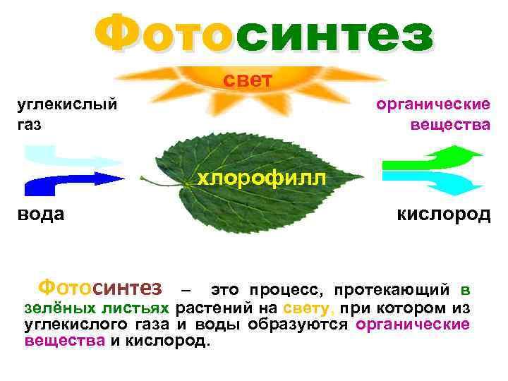 название достопримечательность что необходимо растению для фотосинтеза нашем интернет-магазине