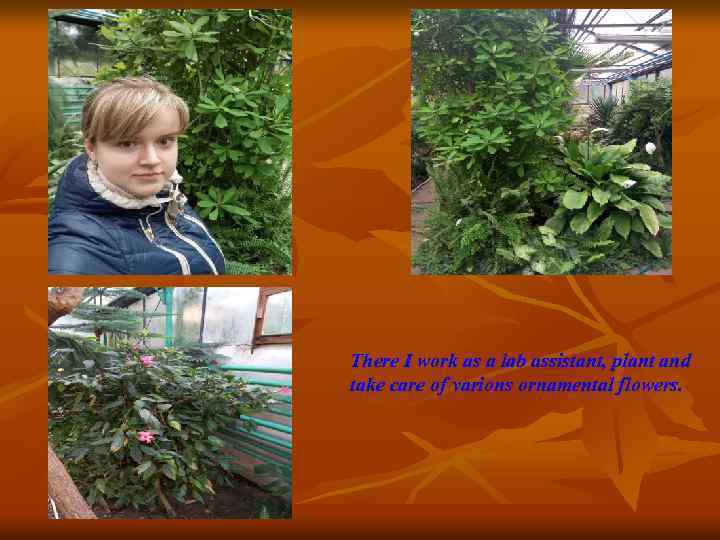 There I work as a lab assistant, plant and take care of varions ornamental