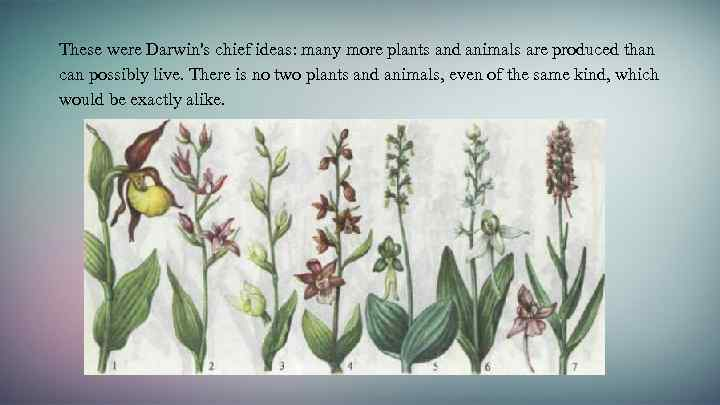 These were Darwin's chief ideas: many more plants and animals are produced than can