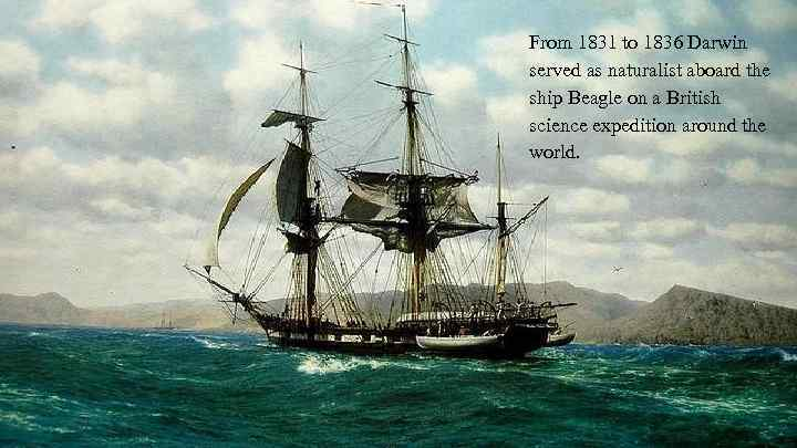From 1831 to 1836 Darwin served as naturalist aboard the ship Beagle on a