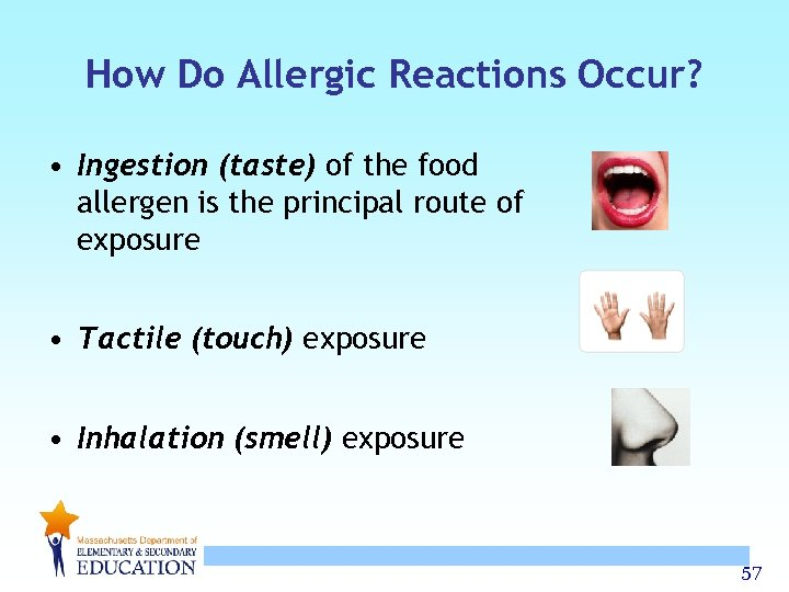How Do Allergic Reactions Occur? • Ingestion (taste) of the food allergen is the