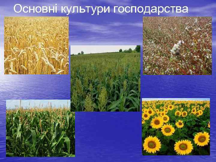 Основні культури господарства