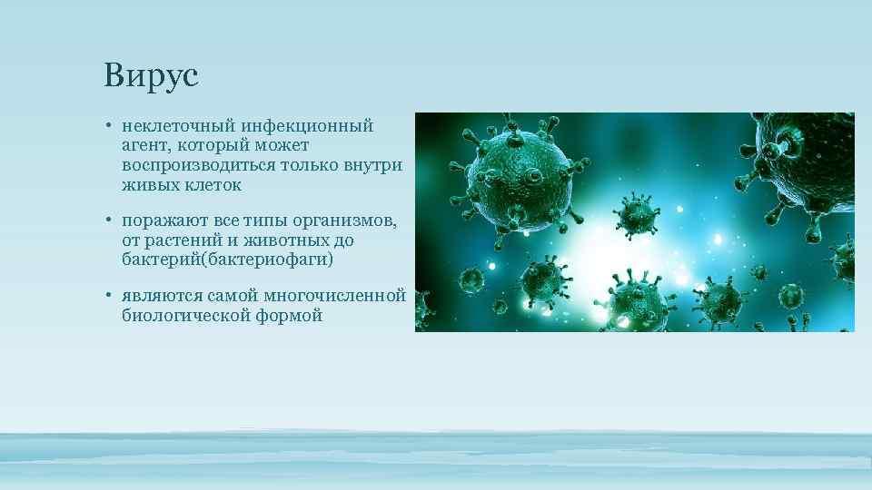 Вирус • неклеточный инфекционный агент, который может воспроизводиться только внутри живых клеток • поражают