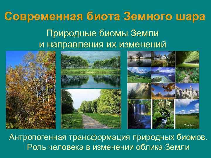 Современная биота Земного шара Природные биомы Земли и направления их изменений Антропогенная трансформация природных