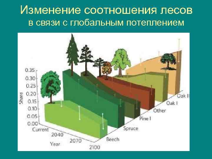 Изменение соотношения лесов в связи с глобальным потеплением