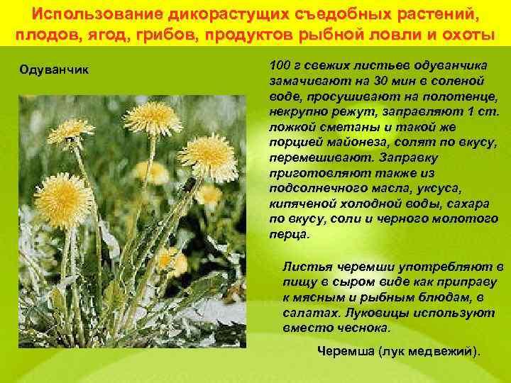 Использование дикорастущих съедобных растений, плодов, ягод, грибов, продуктов рыбной ловли и охоты Одуванчик 100