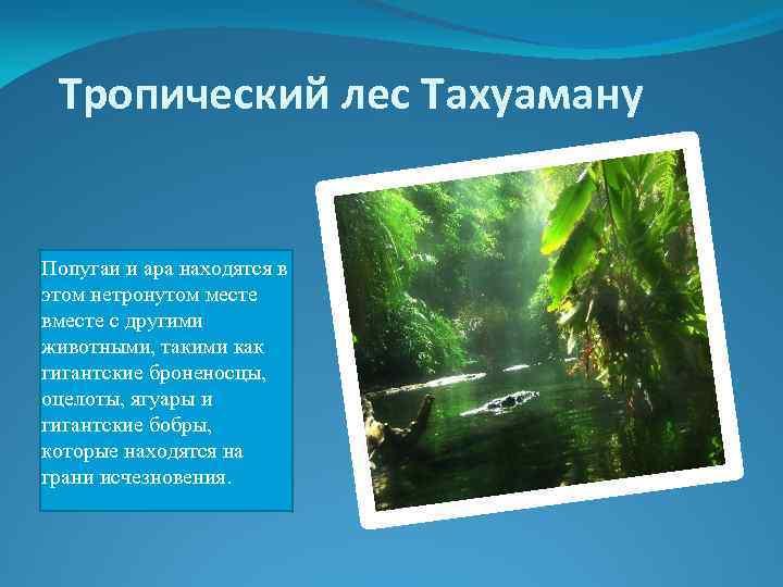 Тропический лес Тахуаману Попугаи и ара находятся в этом нетронутом месте вместе с другими