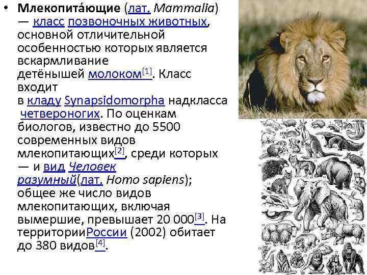 • Млекопита ющие (лат. Mammalia) — класс позвоночных животных, основной отличительной особенностью которых