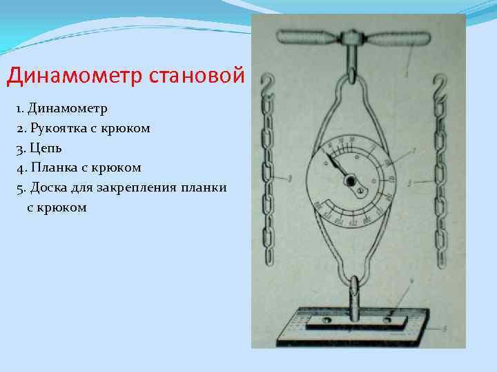 Динамометр становой 1. Динамометр 2. Рукоятка с крюком 3. Цепь 4. Планка с крюком