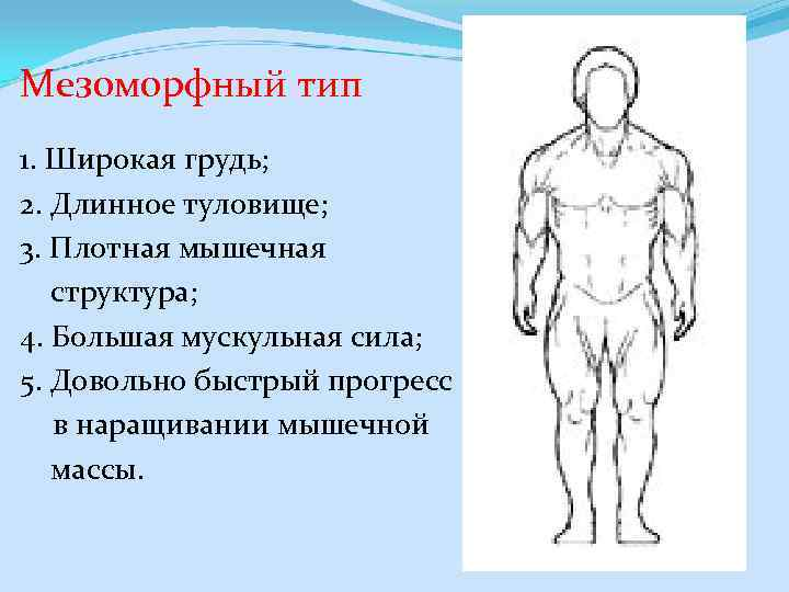 Мезоморфный тип 1. Широкая грудь; 2. Длинное туловище; 3. Плотная мышечная структура; 4. Большая