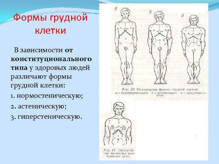 Формы грудной клетки В зависимости от конституционального типа у здоровых людей различают формы грудной
