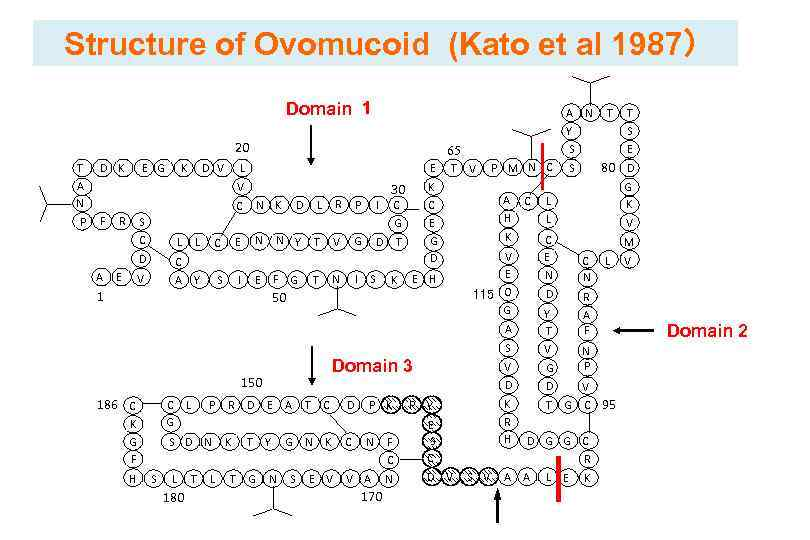 Structure of Ovomucoid (Kato et al 1987) Domain 1 A N T T Y