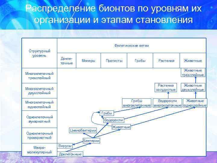 Распределение бионтов по уровням их организации и этапам становления Филетические ветви Структурный уровень Доклеточные