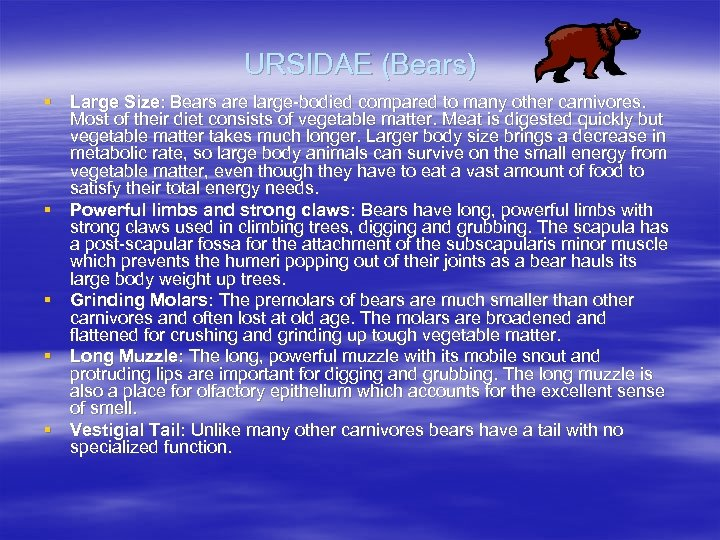 URSIDAE (Bears) § Large Size: Bears are large-bodied compared to many other carnivores. Most