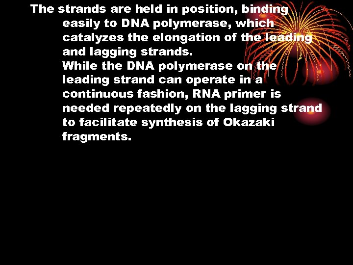 The strands are held in position, binding easily to DNA polymerase, which catalyzes the