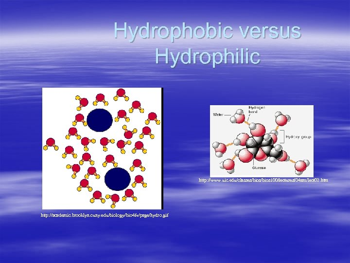 Hydrophobic versus Hydrophilic http: //www. uic. edu/classes/bios 100/lecturesf 04 am/lect 02. htm http: //academic.