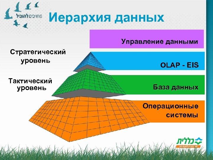 Иерархия данных Управление данными Стратегический уровень Тактический уровень OLAP - EIS База данных Операционные
