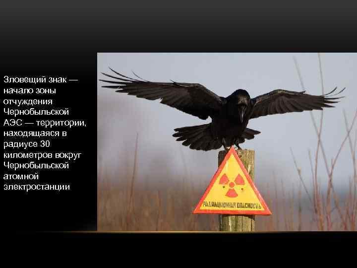 Зловещий знак — начало зоны отчуждения Чернобыльской АЭС — территории, находящаяся в радиусе 30