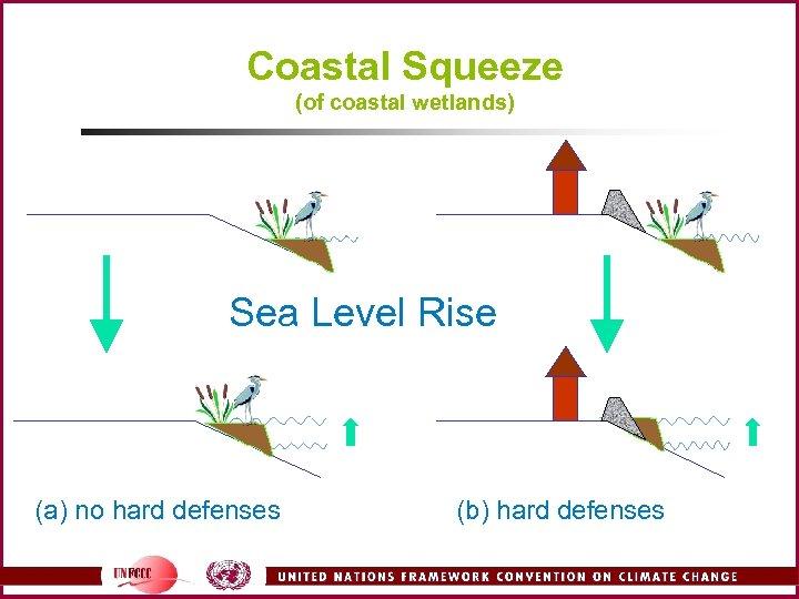 Coastal Squeeze (of coastal wetlands) Sea Level Rise (a) no hard defenses (b) hard