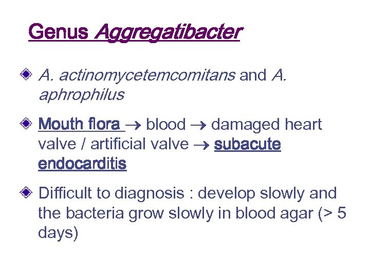 Genus Aggregatibacter A. actinomycetemcomitans and A. aphrophilus Mouth flora blood damaged heart valve /