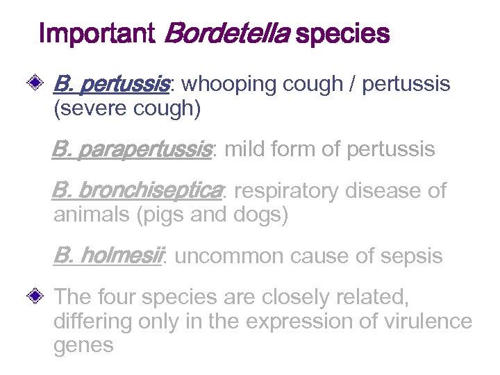 Important Bordetella species B. pertussis: whooping cough / pertussis (severe cough) B. parapertussis: mild