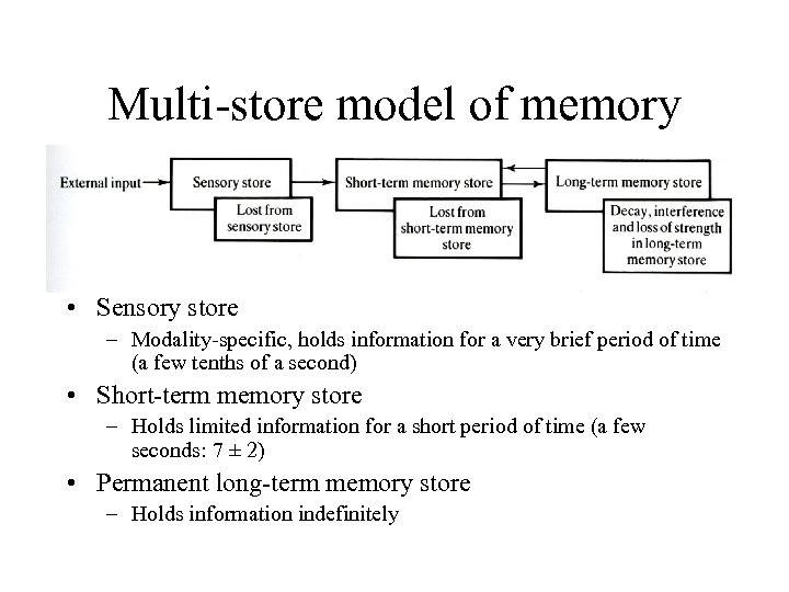 Multi-store model of memory • Sensory store – Modality-specific, holds information for a very