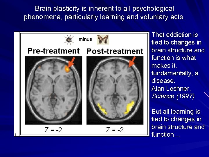 Brain plasticity is inherent to all psychological phenomena, particularly learning and voluntary acts. That