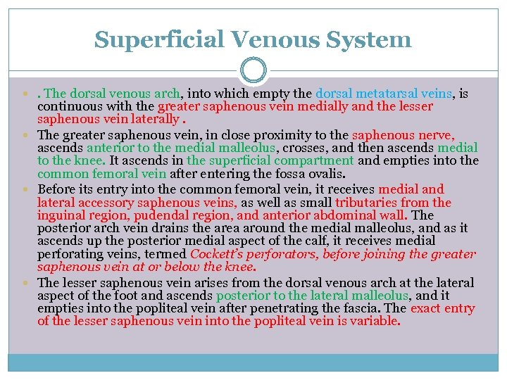 Superficial Venous System . The dorsal venous arch, into which empty the dorsal metatarsal